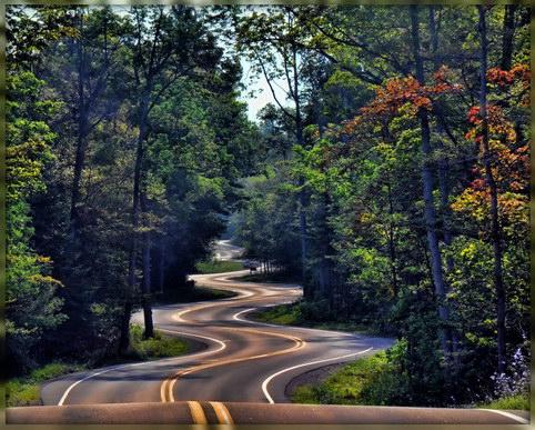 фристайл по лесной дороге